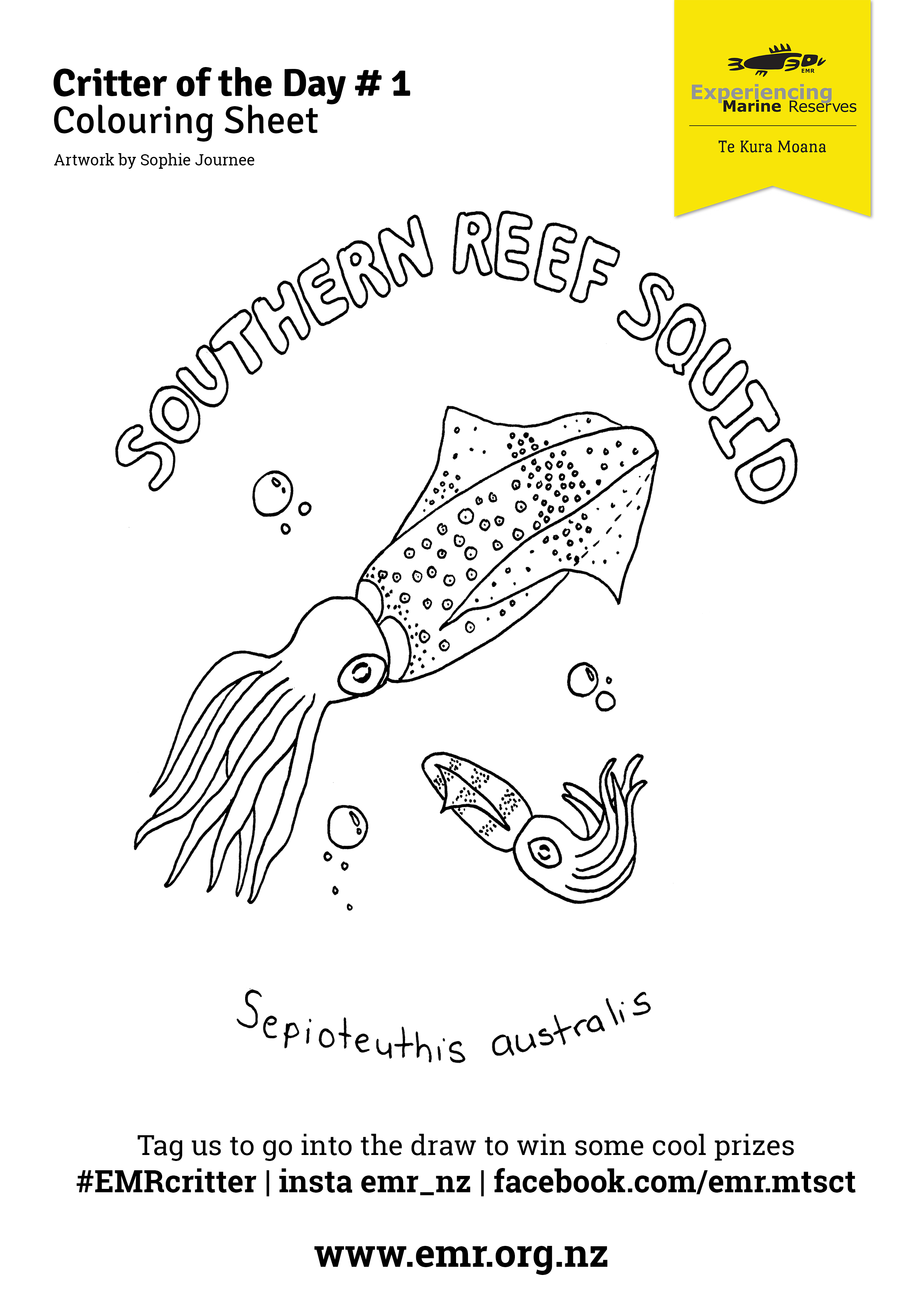 Critter of the Day Southern Reef Squid Colouring in